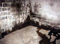 Water entering a basement along cold joint and through the wall.